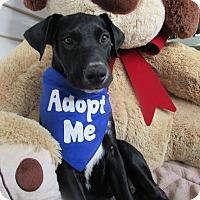 Adopt A Pet :: Hogan - Baltimore, MD