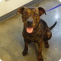 Adopt A Pet :: MAXINE - Tucson, AZ
