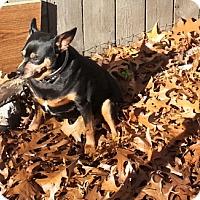 Adopt A Pet :: Wilbur - Holland, OH