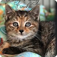 Adopt A Pet :: Paisley - Island Park, NY