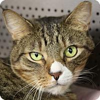 Adopt A Pet :: Wilbur - Sarasota, FL