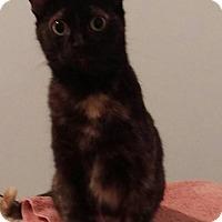 Adopt A Pet :: Cordelia - Rochester, MN