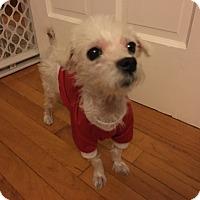 Adopt A Pet :: Frost - Bernardston, MA