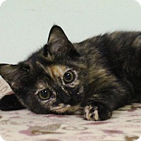 Adopt A Pet :: Tribble - Murphysboro, IL