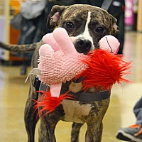 Adopt A Pet :: Callie - Rockford, IL