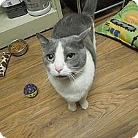 Adopt A Pet :: Bennie - Medina, OH