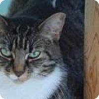 Adopt A Pet :: Pixie - Marietta, GA
