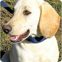 Adopt A Pet :: BUCKLEY - Wakefield, RI
