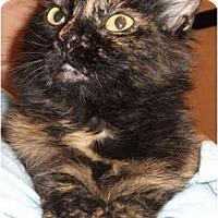 Adopt A Pet :: Annette - Colmar, PA