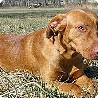 Adopt A Pet :: Hot Rod - Lewisville, IN