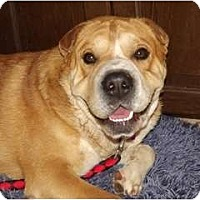Adopt A Pet :: Bugsy (AKA Captain Huggy Face) - Phoenix, AZ