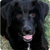 Adopt A Pet :: DRAKE - Providence, RI