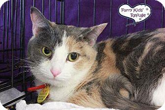 Domestic Shorthair Cat for adoption in Lee's Summit, Missouri - Callie