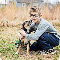 Adopt A Pet :: Charlie - PENDING ADOPTION - Braintree, MA