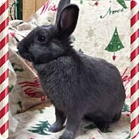 Adopt A Pet :: Bijou - Williston, FL