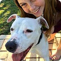 Adopt A Pet :: Courtesy Listing - Ruby - San Diego, CA