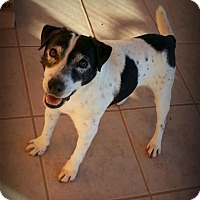 Adopt A Pet :: Clyde - Alamogordo, NM