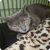Adopt A Pet :: Marsha - Medina, OH