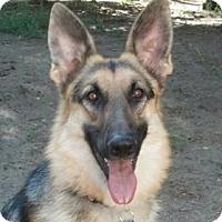 Adopt A Pet :: Bella - Denver, CO