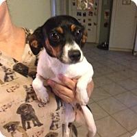 Adopt A Pet :: Trixie - Shelter Island, NY