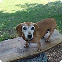 Adopt A Pet :: Ginger - Marcellus, MI