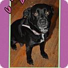 Adopt A Pet :: Petunia (Cw)