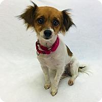 Adopt A Pet :: Gemma - Mission Viejo, CA