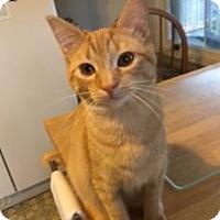 Adopt A Pet :: Cinnamon - Colmar, PA