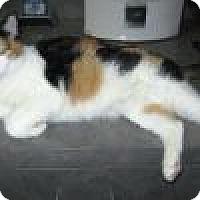 Adopt A Pet :: Peyton - Powell, OH