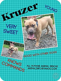 Pit Bull Terrier/Mastiff Mix Dog for adoption in Wanaque, New Jersey - Kruzer