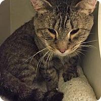 Adopt A Pet :: Lenny - Merrifield, VA