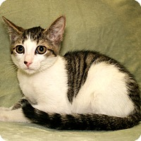 Adopt A Pet :: Tap Man - Bradenton, FL