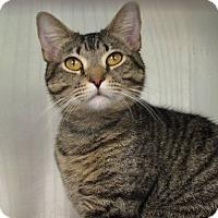 Adopt A Pet :: Steve - Windsor, VA