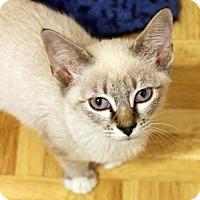 Adopt A Pet :: Bobby Jackson - Dallas, TX