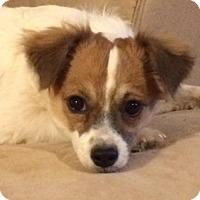 Adopt A Pet :: Sully. - Glendale, AZ