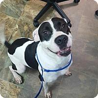 Adopt A Pet :: Trix - Rincon, GA