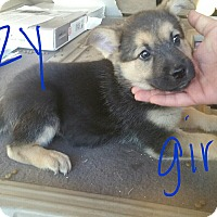 Adopt A Pet :: Darcy's girls - Victorville, CA