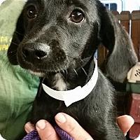 Adopt A Pet :: Bambina - Gainesville, FL