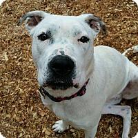Adopt A Pet :: Bella - Newnan, GA