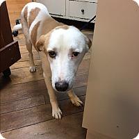 Adopt A Pet :: Janna - Billerica, MA