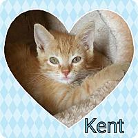 Adopt A Pet :: Kent - joliet, IL