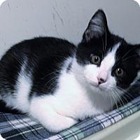Adopt A Pet :: Ellison - St. Louis, MO
