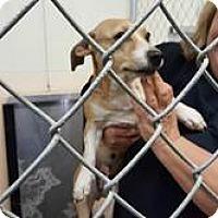Adopt A Pet :: Alexa - Media, PA