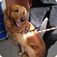 Adopt A Pet :: Duke - Beckley, WV