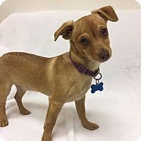 Adopt A Pet :: Peachy - Mission Viejo, CA