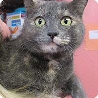 Adopt A Pet :: Val - Reeds Spring, MO