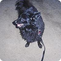 Adopt A Pet :: Aragon - Orange Park, FL