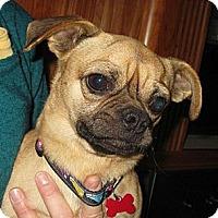 Adopt A Pet :: Gunther - Salem, OR