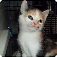 Adopt A Pet :: Kiera - Acme, PA