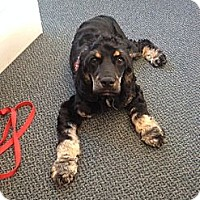 Adopt A Pet :: Sally - Adoption Pending - Vancouver, BC